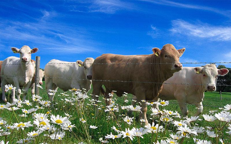 Herds & Crops